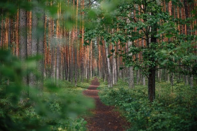 wooded spiritual path with trees
